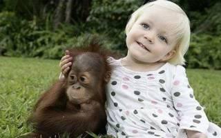Как назвать обезьянку девочку, имя для мартышки