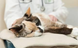 Болезни желудка у кошек симптомы лечение – проблемы с кишечником у котенка