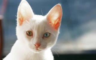Энтерит у кошки симптомы и лечение