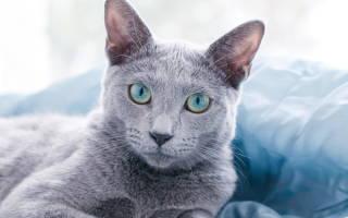 Как сделать кота ласковым, неласковая кошка