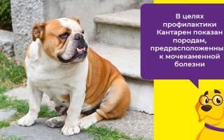 Кантарен для собак отзывы – кантарден как возбудитель