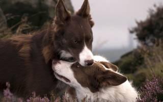 Собака прижимает уши к голове