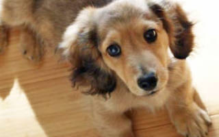 Какая самая дешевая порода собак?