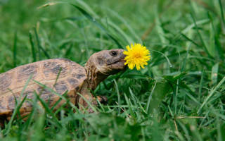 Сухопутная черепаха не ест что делать