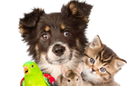 Заворот века у кошки, есть ли ресницы у кошек?