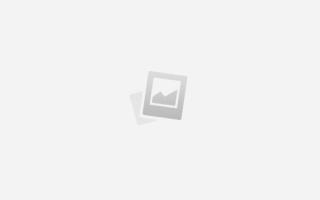 Заворот век у сфинксов, энтропион у кошек